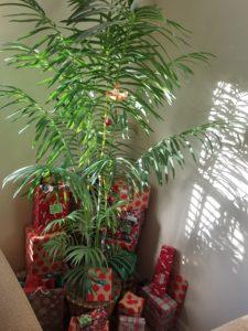 Our Florida vacation Christmas Palm!