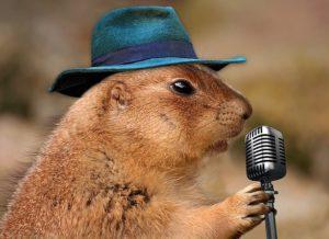 Prairie dog singer
